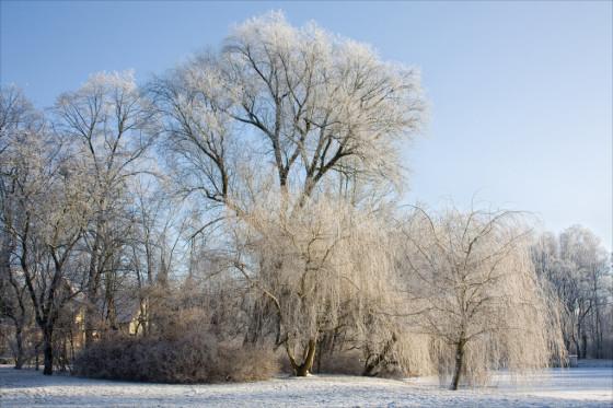 Winter am Schöppenteich / Taucha